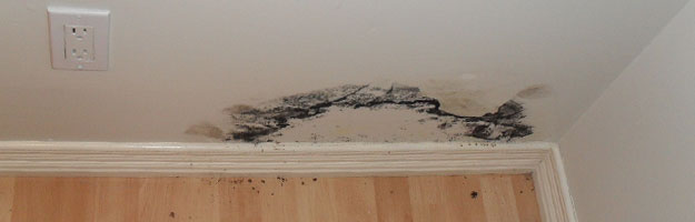 How Fast Does Mold Grow Become A Problem