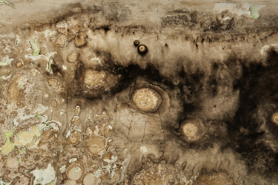 How Dangerous Is Mold Infestation Advice For Little Rock Ar Property Owners