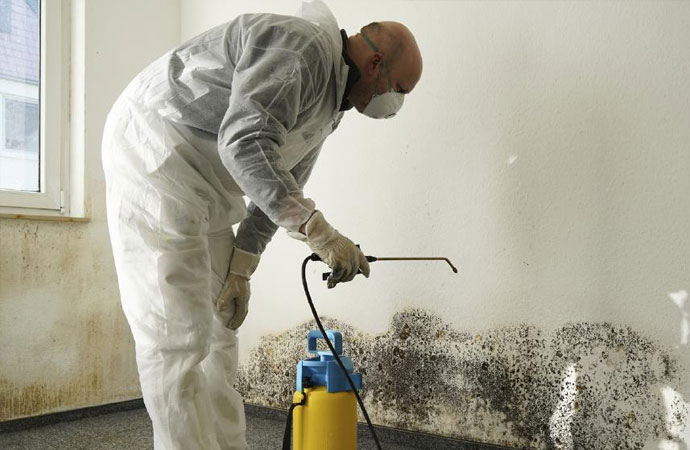 mold is removing using special chemicals and dehumidifier
